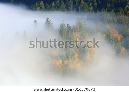 Mystical autumn forest on the mountain slope - stock photo