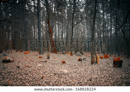 mystical cemetery in the woods - stock photo