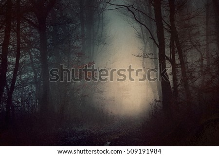 Mystical dark forest wallpaper