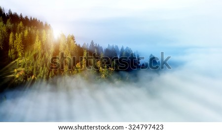 Mystical forest on the mountain slope