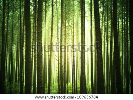 Mystical green forest