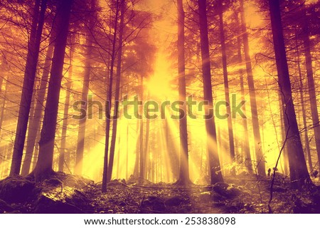 Mystical orange red forest scene with sunbeams. - stock photo