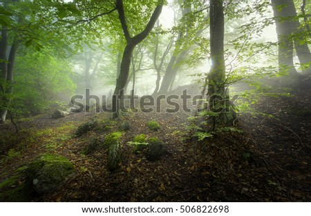 Mystical spring forest in fog. Magical old trees in clouds at sunrise. Colorful landscape with foggy forest, sunlight, trail, green and red foliage. Fairy forest. Spring woods. Enchanted green trees