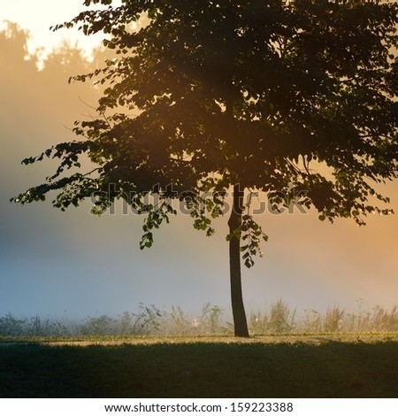 Mystical tree silhouette in fog - stock photo