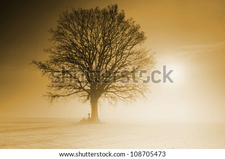 Mystical winter scene with lonely tree in the back light