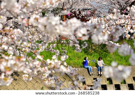 NAGOYA, JAPAN - MARCH 30 : Cherry blossom flowers in garden with many people at Japan Nagoya, Japan on March 30, 2015. Nagoya was a famous place of sakura garden. - stock photo