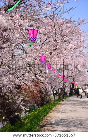 NAGOYA, JAPAN - MARCH 30 : Cherry blossom flowers in garden with many people at Japan Nagoya, Japan on March 30, 2015. Nagoya was a famous place of sakura garden.