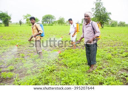 NAGPUR, MAHARASHTRA, INDIA - JUL 05 : Unidentified Agricultural workers spraying pesticide in soybean fields. An Indian farming scene. 5 July  2013. Nagpur,Maharashtra, India
