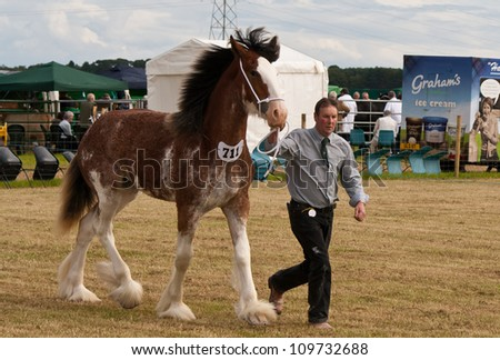 NAIRN, SCOTLAND - JULY 28: An unidentified farmer displays his horse at the annual Nairnshire Farmers Society show on JULY 28, 2012 in Nairn, Scotland.