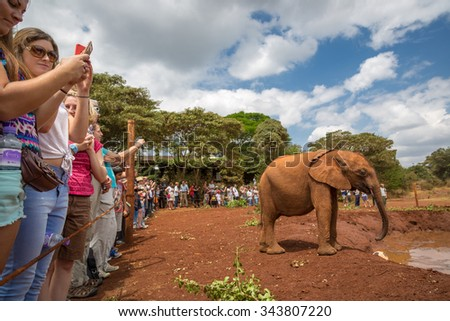 Nairobi, Kenya - October, 1st 2015 - Big group of locals and tourists enjoying the Sheldrick Trust Elephant Orphans Project in a cloudy day at Nairobi, Kenya's capital, east Africa. - stock photo