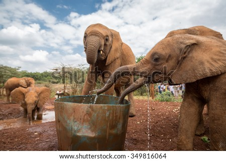 Nairobi, Kenya - October 15th 2015 - Tourists and locals visiting the Sheldrick Elephant Conservancy in Nairobi, Kenya's capital, East Africa.  - stock photo