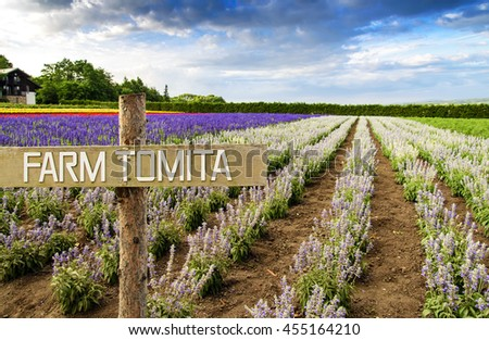 NAKAFURANO, JAPAN-JULY 22: Lavender field at Tomita farm, Nakafurano, Japan on July 22, 2013. This is the famous lavender farm for flower blooming scenic during summer of Hokkaido. - stock photo