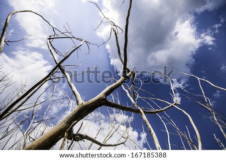Naked branches of a tree against blue sky close up - stock photo