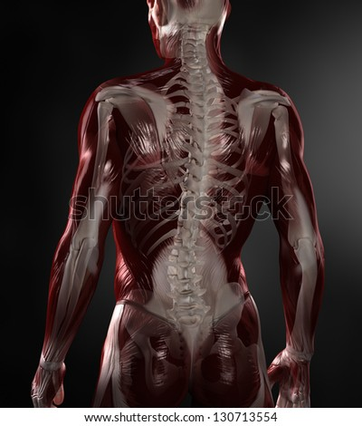 Naked man with visible muscles and skeleton