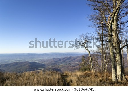 Naked tree forest. Late fall. Beautiful scenery with bright sunlight