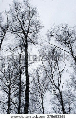 Naked trees in winter over grey sky