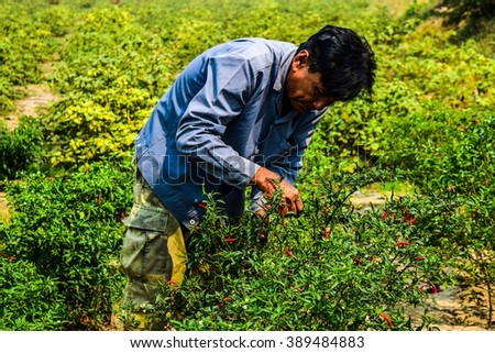 NAKHON SAWAN, THAILAND - March 4, 2016 : Unidentified Farmers   farmers store chili in handon March 4, 2016 in Nakhon Sawan, Thailand