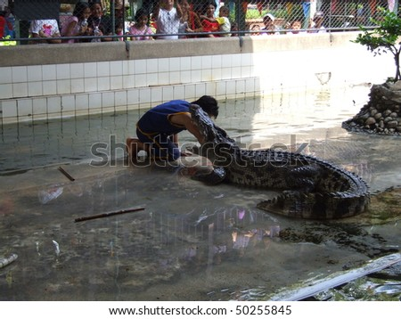 NAKOM PATHOM THAILAND, October 8: Crocodile wrestlers performing a show in October 8, 2005 in Nakom Pathom, Thailand.