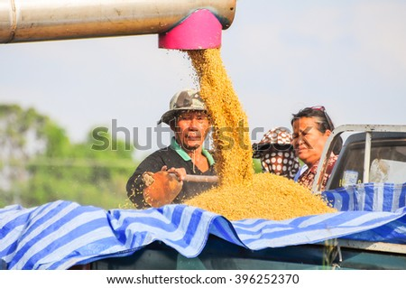 Nakornratchasima, Thailand -  Dec 11, 2014 -  An unidentified man works a rice harvester to carry paddy from rice field to barn house during harvest season - stock photo