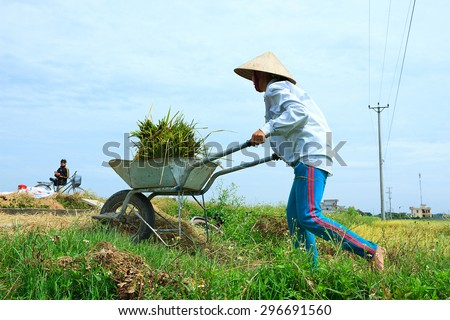 NAMDINH VIETNAM - JUN 14: Farmers harvesting rice in their fields on Jun 14, 2015 in Namdinh, Vietnam. This is the main shipping method farmers.
