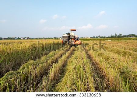 NAMDINH VIETNAM - October 27, 2015: Farmers harvesting rice in their fields