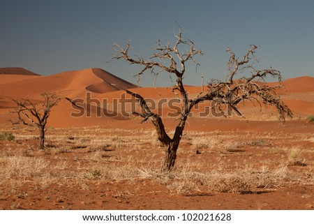 Namibian desert - stock photo