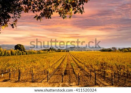 Napa Valley Autumn Vineyards, Mountains, Sunset - stock photo