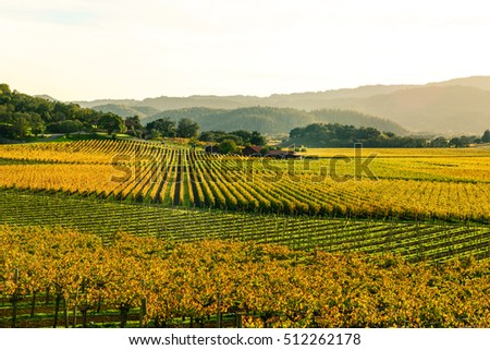 Napa Valley California in Autumn