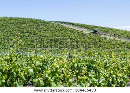Napa Valley, California - May 12 : Man in a tractor working the grape fields in springtime, May 12 2015 Napa Valley, California.
