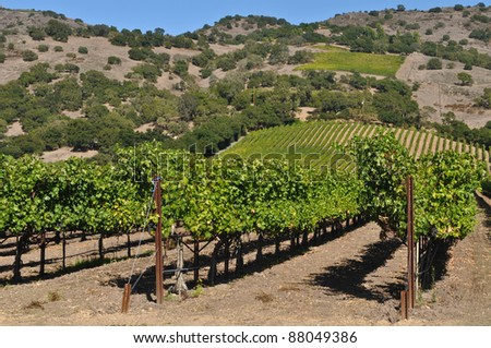 Napa Valley California Winery - stock photo