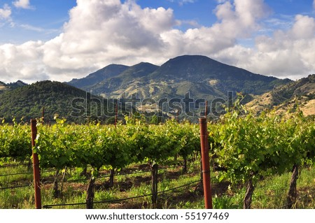 Napa Valley vineyard in the spring - stock photo