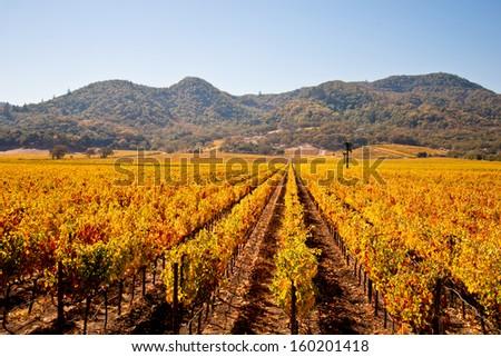 Napa Valley Vineyards in Autumn - stock photo
