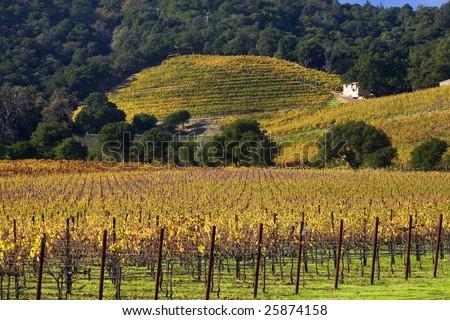 Napa Vineyards in the Morning Fog California - stock photo
