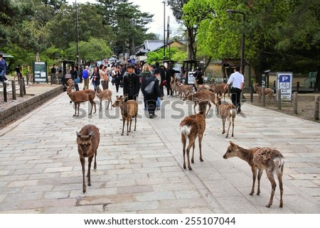 NARA, JAPAN - APRIL 26, 2012: Visitors feed wild deer in Nara, Japan. Nara is a major tourism destination in Japan - former capital city and currently UNESCO World Heritage Site. - stock photo