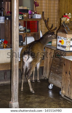 Nara, Japan - June 18, 2010: A deer steals food from a shop in Nara, on 18 June 2010. Nara is famous for its herds of semi-wild deer roaming the streets. - stock photo
