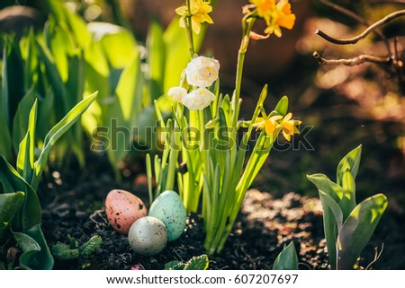 narcissus and easter eggs on the spring background