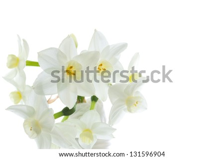 Narcissus flowers - stock photo