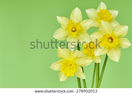 Narcissus on a green background
