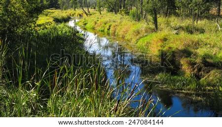 Narewka River in summer midday near Bialowieza Village - stock photo