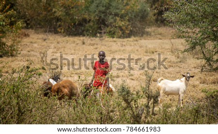 Maasai Warriors Stock Images RoyaltyFree Images Vectors - Maasai tribe wild animals attend wedding kenya