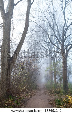 narrow path between trees in misty day