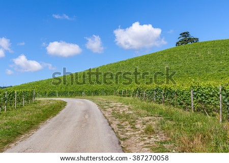 Narrow rural road along hill with green vineyards under blue sky in Piedmont, Northern Italy.