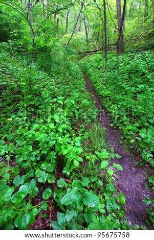 Narrow trail cuts through dense understory vegetation at Mississippi Palisades State Park in Illinois - stock photo