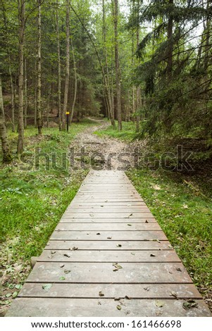 Narrow wooden walkway along lush forest