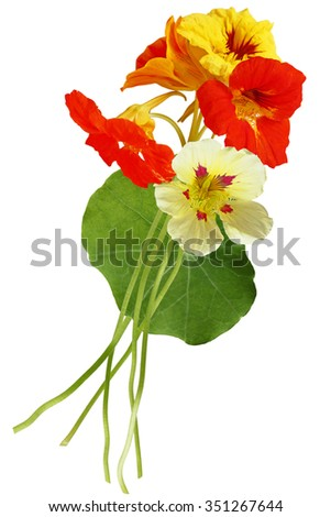 Nasturtium flower bouquet isolated on white background - stock photo