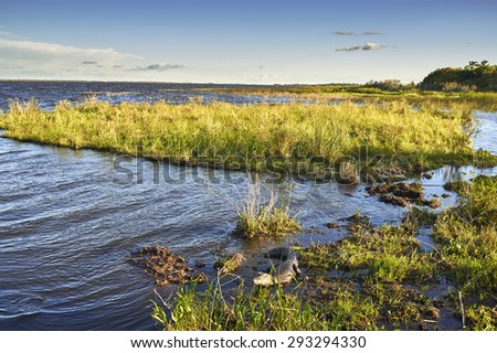 NATIONAL PARK ESTEROS DEL IBERA, CORRIENTES, ARGENTINA - NOV 25, 2014: Wetlands in Nature Reserve Esteros del Ibera, Colonia Carlos Pellegrini, Corrientes, Argentina. - stock photo