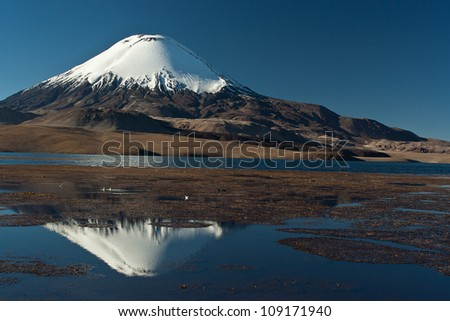 National Park Lauca , lake Chungara and   snow cap volcano Parinacota - stock photo