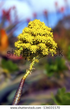 native australian flora against blue sky - stock photo