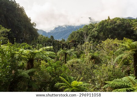 Native bush of New Zealand (West Coast) - stock photo