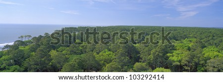 Native trees at Hunter Island near Hilton Head, South Carolina - stock photo